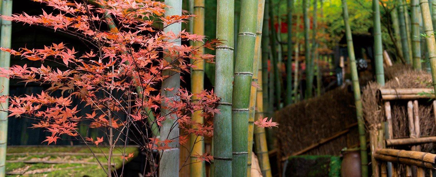009 autumn 1600x9001 | Takefue Ryokan  –  Kyūshū