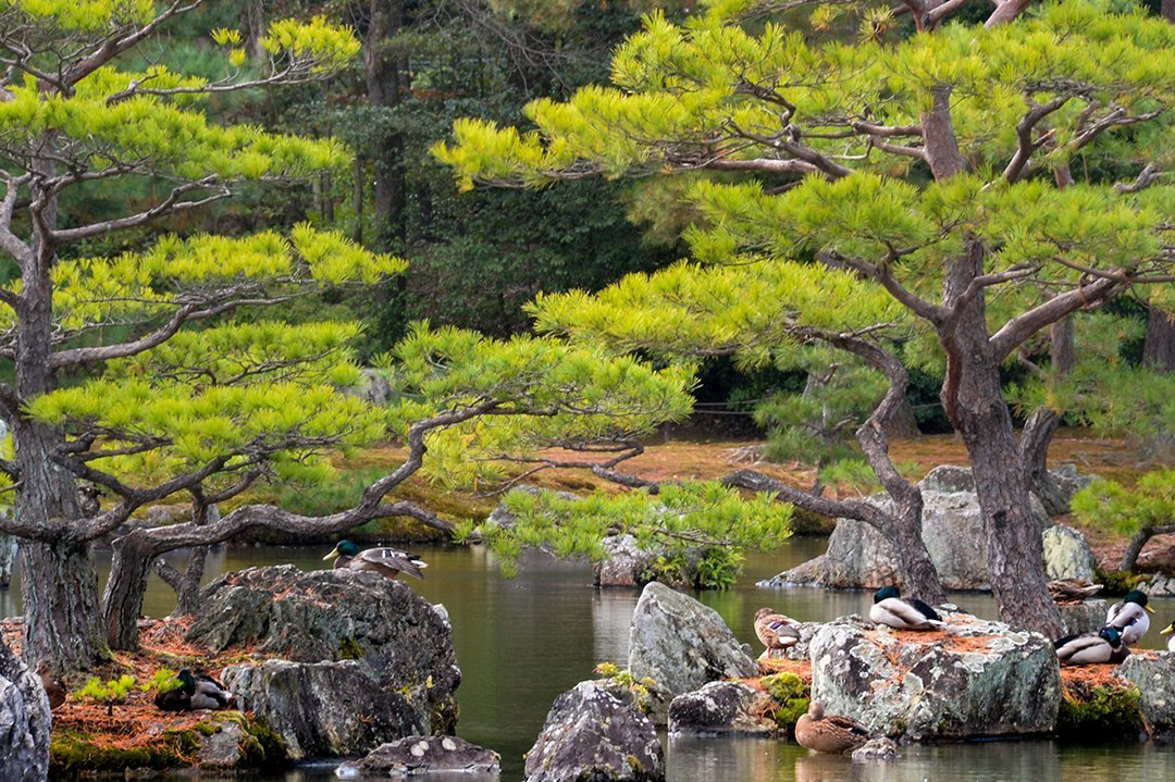 Kinkaku Ji 031   Kinkaku-ji 金閣寺 –  Kyōto
