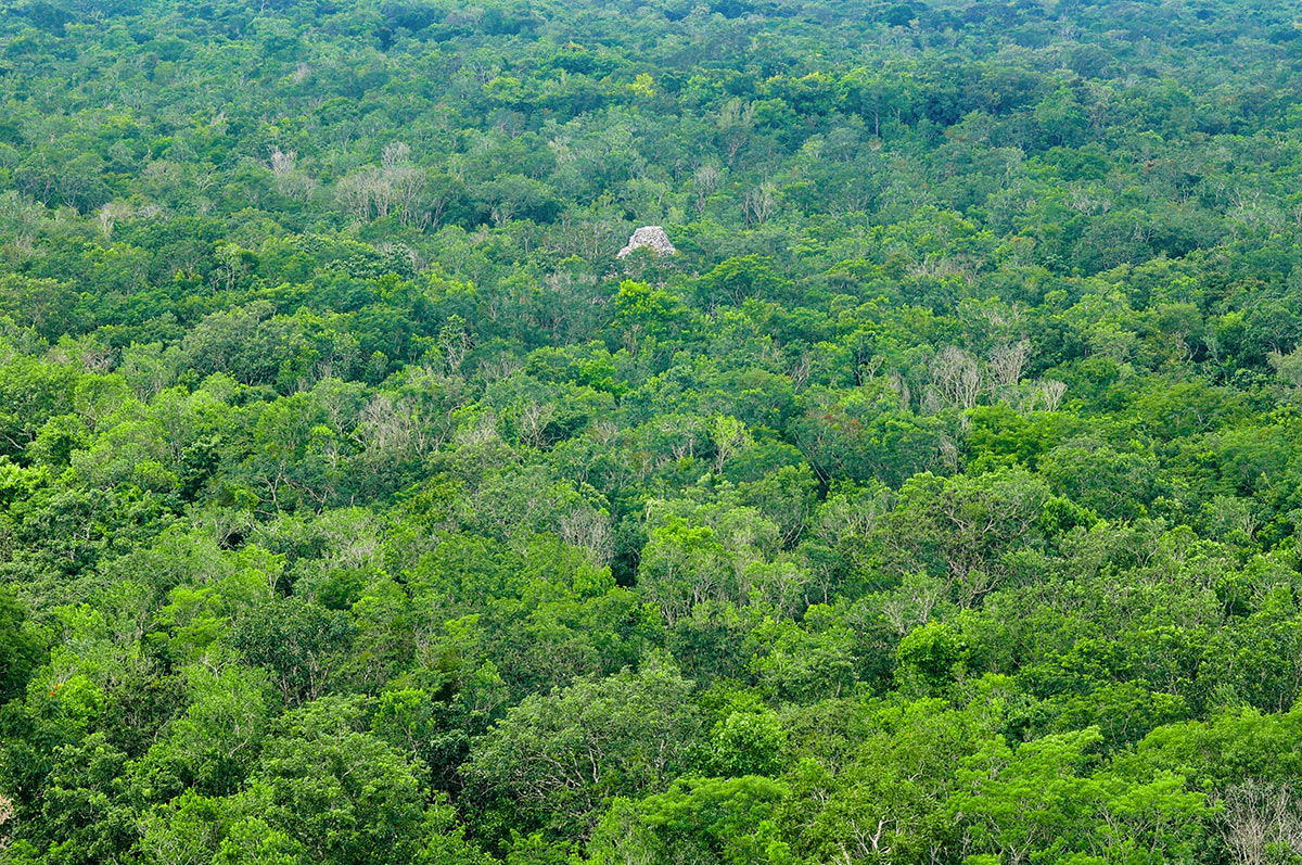 archeological complex of Coba Mayan Ruins in the forest