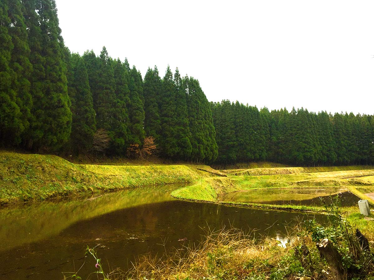 green grass, trees and a pond