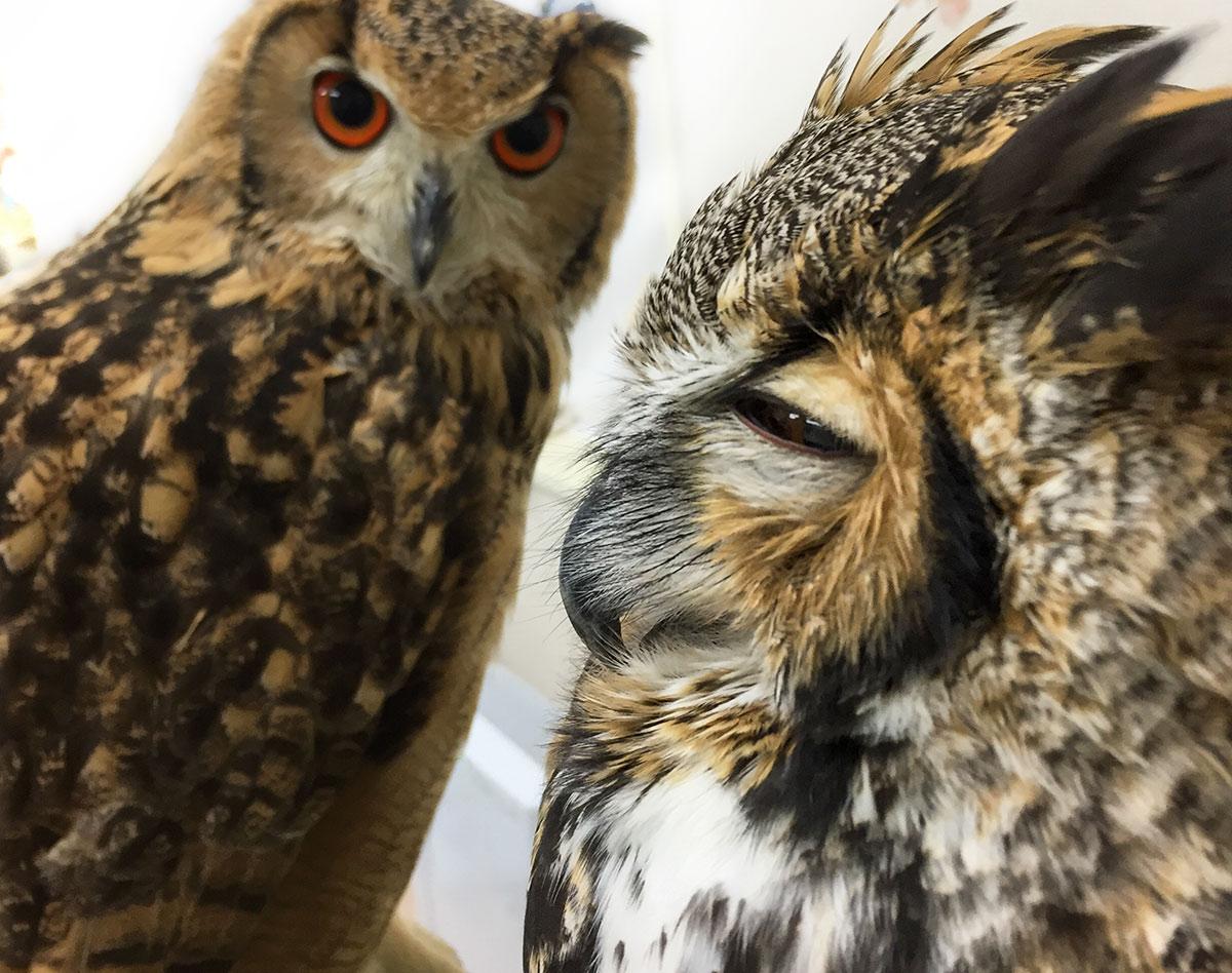 Owl Cafe 024b | Owl Cafe Tokyo