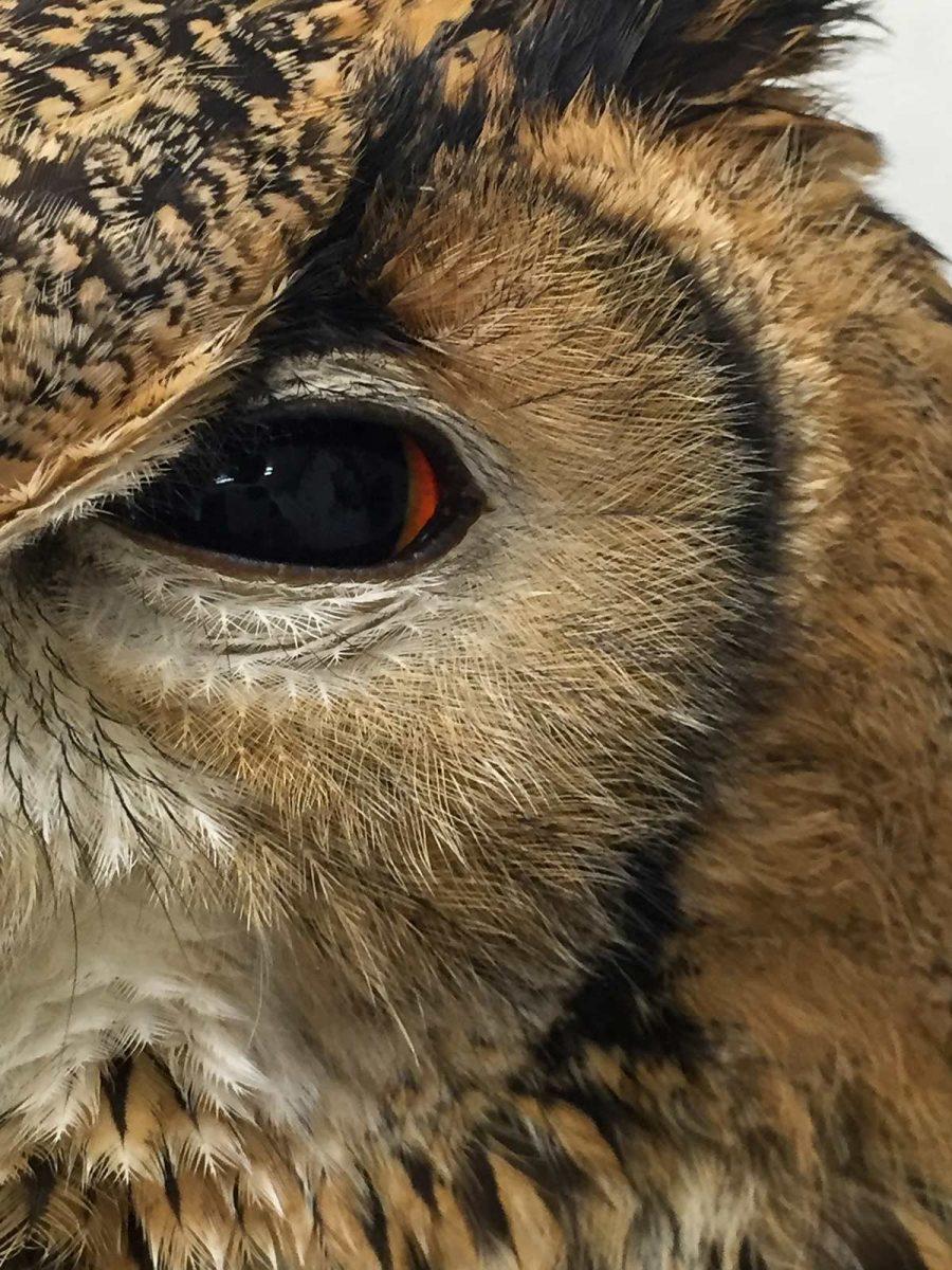 owl eye at Owl Cafe Tokyo