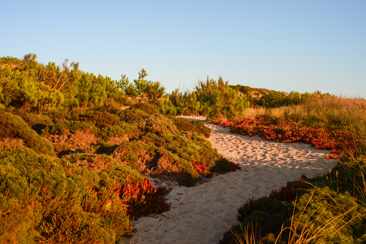 Path to the Areias Do Seixo beach in Portugal