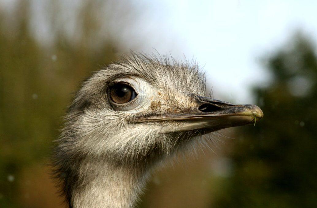The Wildlife Park Somerset